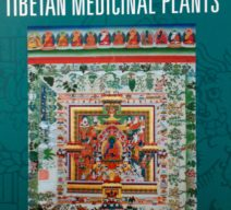 a-clear-mirror-on-tibetan-medicinal-plants